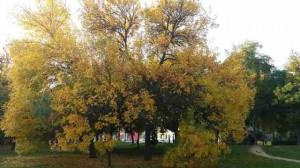 The colors of early Autumn in Timisoara, Romania.
